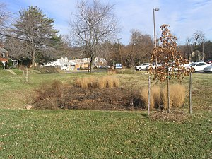 Bioretention - A bioretention cell, also called a rain garden, in the United States. It is designed to treat polluted stormwater runoff from an adjacent parking lot. Plants are in winter dormancy.