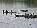 Bird Group 9254.jpg