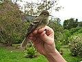 Bird peace.jpg