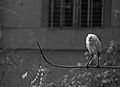 Bird perched on a branch (black-and-white).jpg