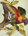 Birds and nature (1897) (19761504004).jpg