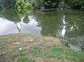 Birds in Zoo Negara Malaysia (20).jpg