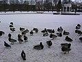 Birds in the Kadriorg Park - panoramio.jpg