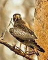 Birds of Maharashtra3.jpg