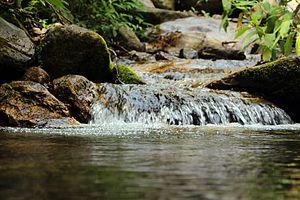 Bisnumati River - Bishnumati River