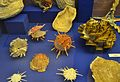 Bivalves, col·lecció malacològica, museu paleontològic d'Elx.jpg