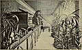 Blätter für Aquarien- und Terrarien-Kunde (1901) (20392502821).jpg