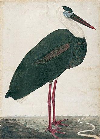 Black Stork in a Landscape - Image: Black Stork in a Landscape MET 2000.266