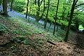 Bluebells in Ockbrook Wood - geograph.org.uk - 1839287.jpg