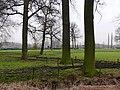 Bornem Bomenrij Kasteel Marnix van Sint-Aldegonde (4) - 193191 - onroerenderfgoed.jpg