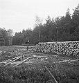 Bosbewerking, arbeiders, boomstammen, werkzaamheden, houtopslag, Bestanddeelnr 253-5982.jpg