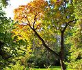 Botanička bašta Jevremovac, Beograd - jesenje boje, svetlost i senke 09.jpg