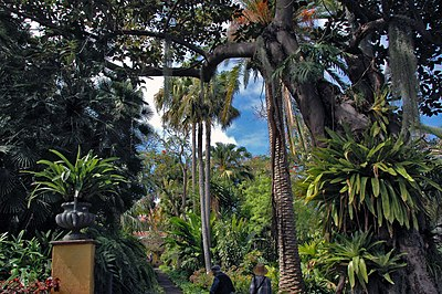 Jardín de aclimatación de La Orotava – Wikipedia