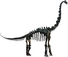 Brachiosaurus mount.jpg