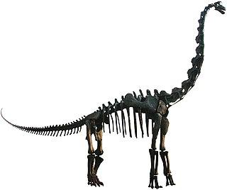 <i>Brachiosaurus</i> genus of reptiles (fossil)