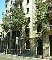 Brachychyton populneum carrer Balmes Barcelona.jpg