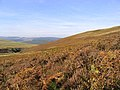 Bracken covered hillside - geograph.org.uk - 577241.jpg
