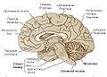 Brain-2-uk.jpg
