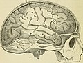 Brain and mind; or, Mental science considered in accordance withthe principles of phrenology, and in relation to modern physiology (1882) (14594521798).jpg