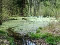 Branišovský les, mokřad 04.jpg