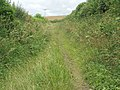 Bridleway - geograph.org.uk - 491185.jpg