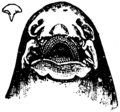 Britannica Shark Nasal and Buccal Cavities.png