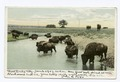 Buffalo at Water (NYPL b12647398-68230).tiff