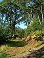 Burnie Oak Wood - geograph.org.uk - 1490606.jpg
