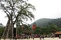 Cây đa 9 cội trước sân đền Thỏng - panoramio.jpg