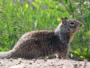 300px CA Ground Squirrel Britney Moving Into $25,000 mo. House in Thousand Oaks