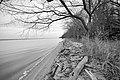 CA winter along the Potomac shoreline (8329875117).jpg