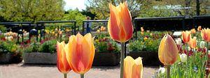 Chicago Botanic Garden - Heritage Garden in spring