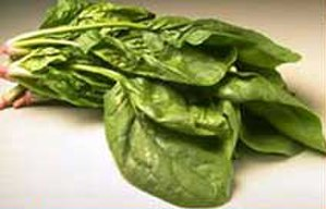 Spinach in the United States - Spinach
