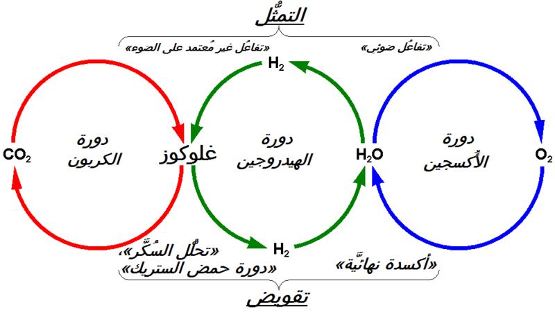 دورة الهيدروجين Wikiwand