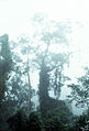 CSIRO ScienceImage 100 Mistshrouded Northern Rainforest.jpg
