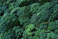CSIRO ScienceImage 1336 Rainforest Canopy.jpg