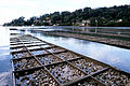 CSIRO ScienceImage 2901 Oyster Farming.jpg