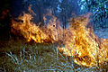 CSIRO ScienceImage 367 Scrub Fire.jpg