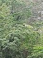Cañón del Sumidero, Octubre 2020 - 14.jpg