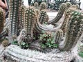 Cactus20180912 120429.jpg