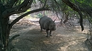 Caged Rhino.jpg