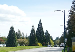 Cambie Street - Cambie Street Boulevard Median, looking southward from King Edward Avenue.