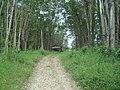 Camping Parque Curumim - panoramio - jkern (2).jpg