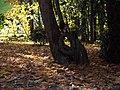 Campogrande Valladolid hojas lou.jpg