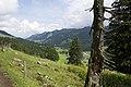 Canton de Schwytz - panoramio (29).jpg