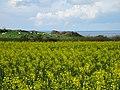 Cap Blanc-Nez.- Le mont d'hubert (1).jpg
