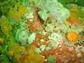 Cape dorid and egg ribbon at Pinnacle PB022208.JPG
