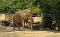 Caracas zoo elephant.jpg