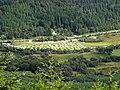 Caravan Site in Strathyre - geograph.org.uk - 955666.jpg