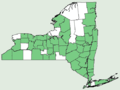 Carex radiata NY-dist-map.png